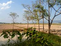 12 Rai Rice Land Reduced Price